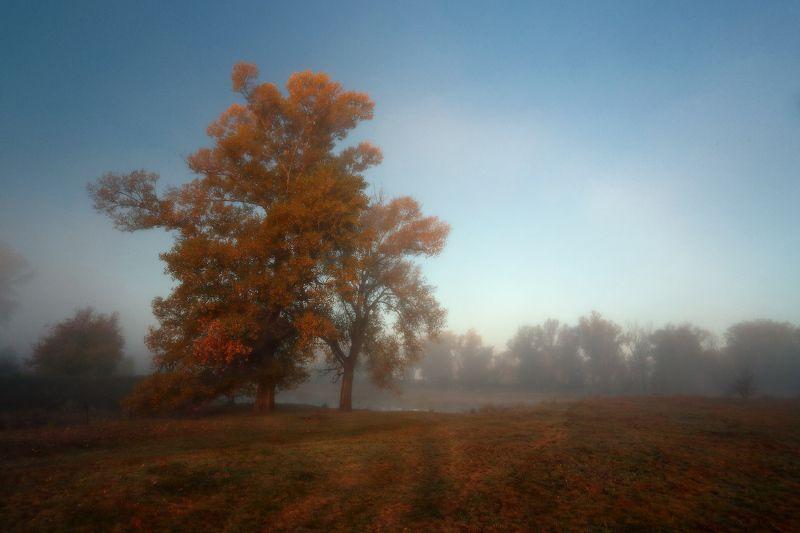 осень утро туман ***photo preview