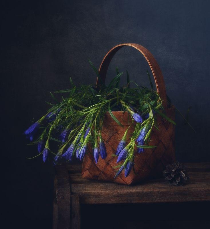 натюрморт,лето,цветы,горечавка горечавка...photo preview