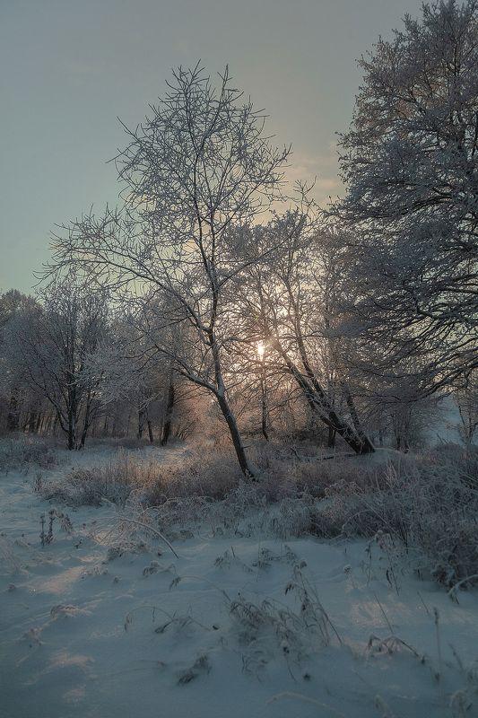 зима, парк, пейзаж, деревья Зимний вечерphoto preview
