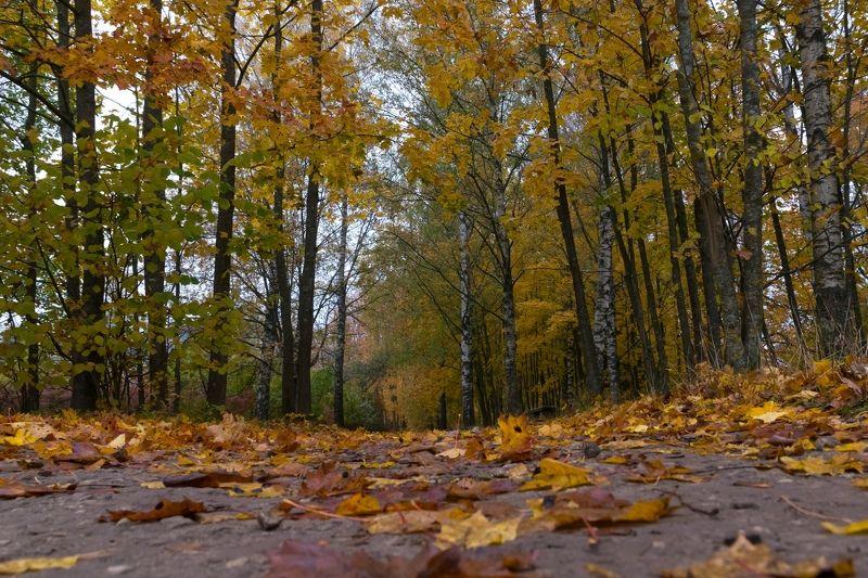 Изборск, Псков, осень, листья, природа, деревня Осеньphoto preview