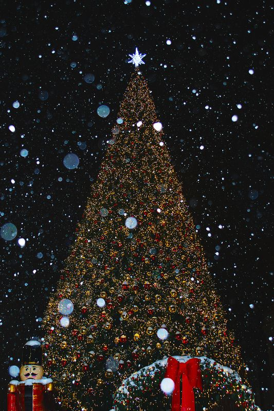 ёлка, снег, ночь, ёлочные игрушки Новогодняя красавицаphoto preview