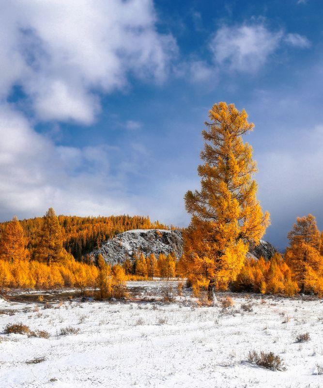Осенние контрастыphoto preview