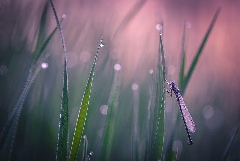 В утренней росе.photo preview