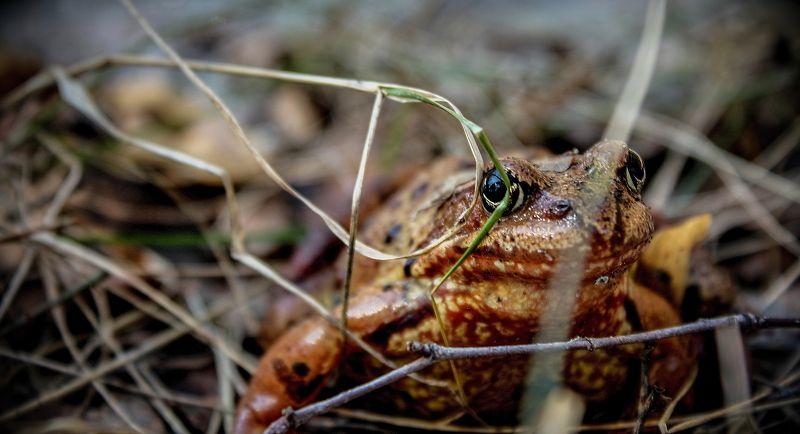 лес, лягушка, лягушки, маскировка, осень, трава maskingphoto preview