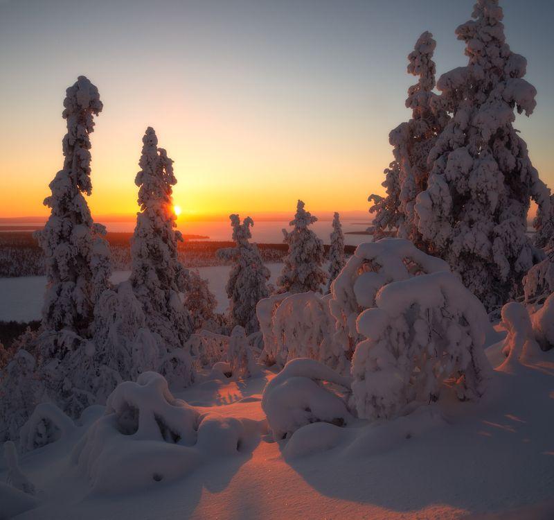 пейзаж,лес,снег,свет,закат,россия,кольский,север,зима,имандра На закате дняphoto preview