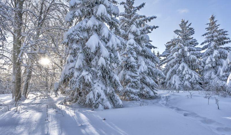 зима, солнечный день, мороз,  елочки Елочки.photo preview