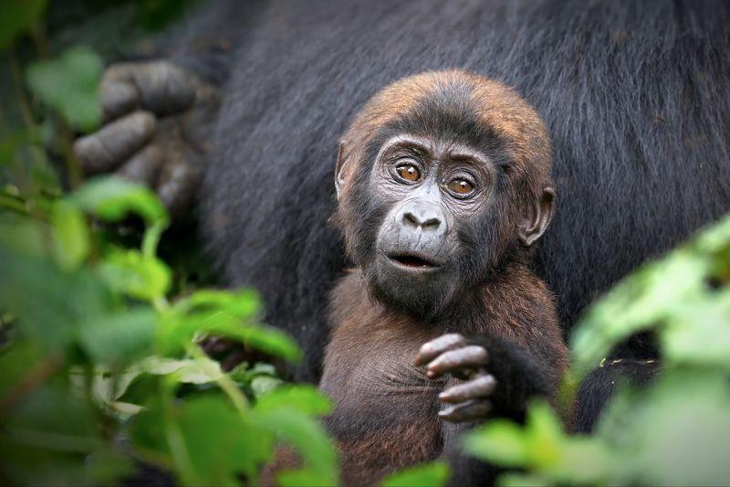 Планета обезьянphoto preview