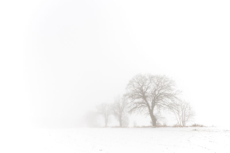 landscape winter tree fog Зимаphoto preview