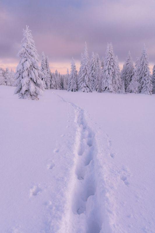 Mountains, winter, snow, nature, landscape, sun, nikon, z6,  Jizera mountainsphoto preview