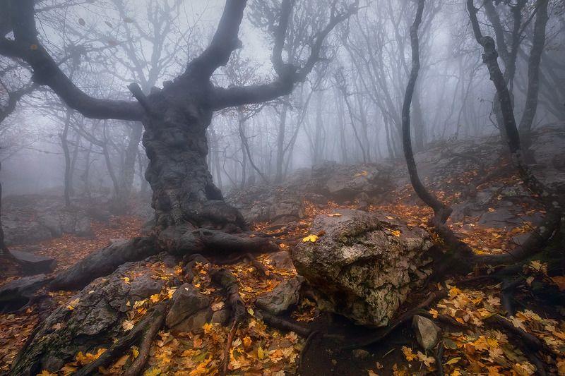 Лесной стражникphoto preview