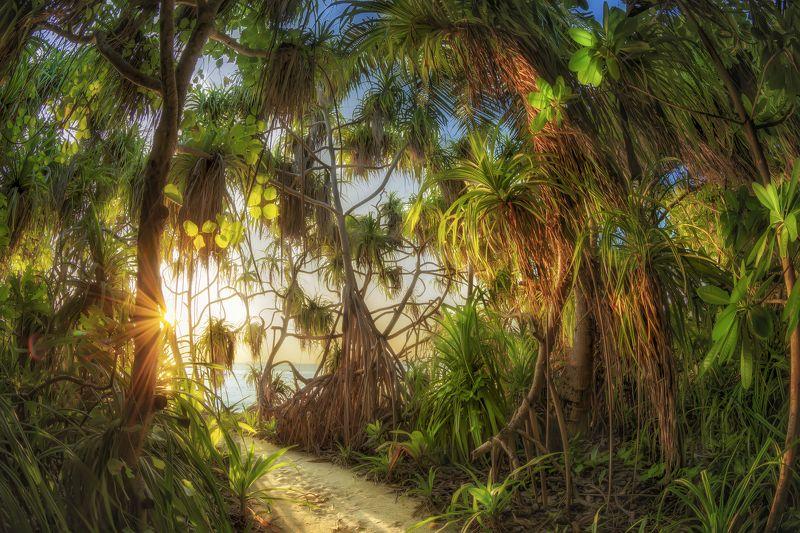 island, indian ocean,morning Утро Робинзонаphoto preview