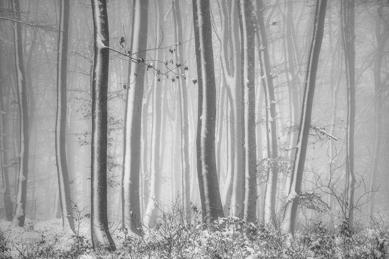 White stripesphoto preview