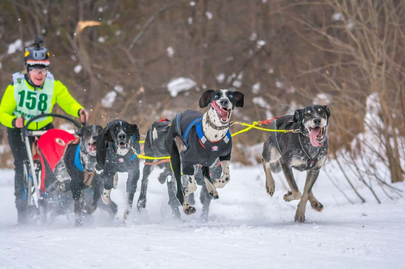 собаки спорт упряжки зима Упряжкаphoto preview