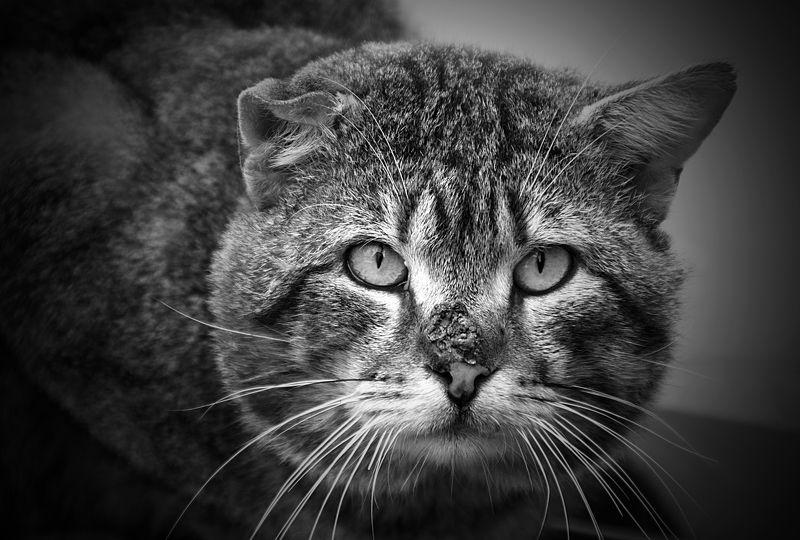 коты, бездомные коты, животные, черно-белое бандитphoto preview