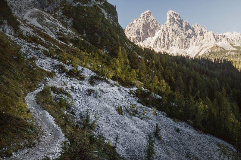 лес; горы; тропа; доломиты По путиphoto preview