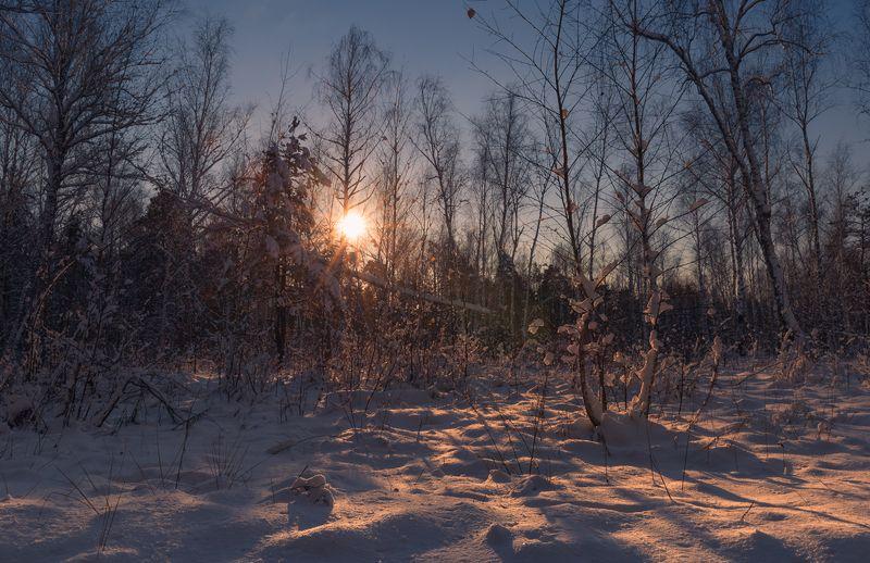 лес, зима, декабрь, утро, рассвет, снег Холодный рассветphoto preview