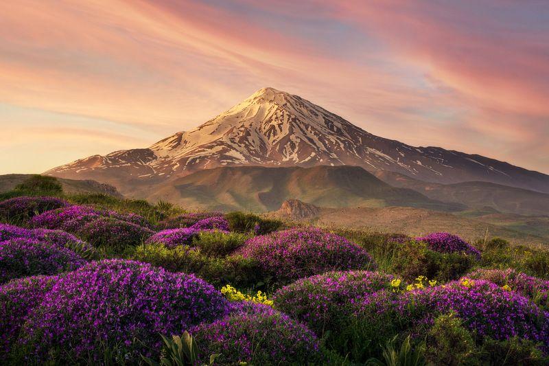 mountain sky cloud flower Damavand Mountphoto preview