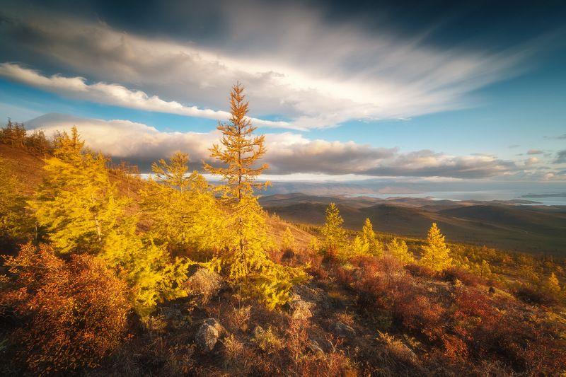 россия, иркутская область, байкал, тажераны, степь, лесостепь, рассвет, природа, пейзаж, восход солнца, останцы, осень, лиственница Пылающие лиственницыphoto preview