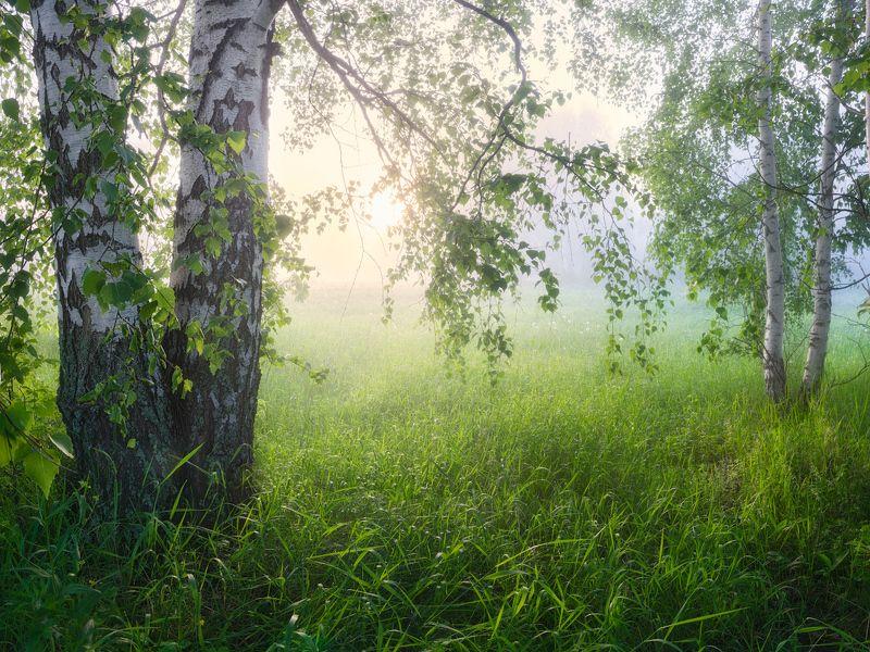 туман, лето, рассвет Запуталось солнце в березовых веткахphoto preview