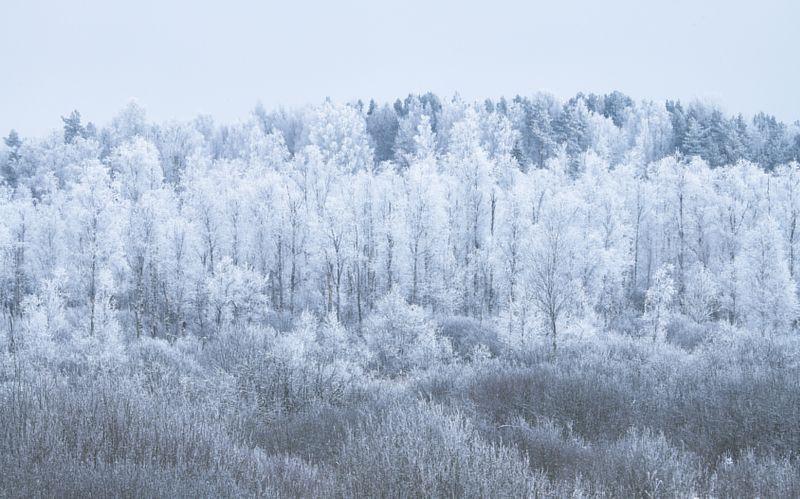 Белая зимаphoto preview