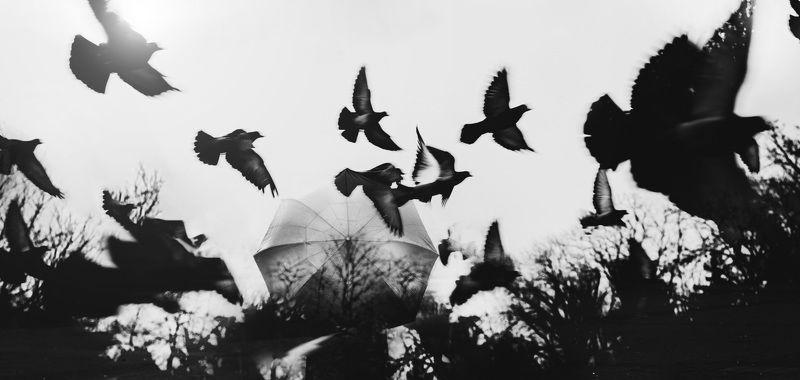 чб,силуэт,зонт,птицы Томный мигphoto preview