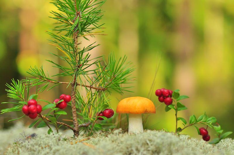 Осеннее настроение :)photo preview