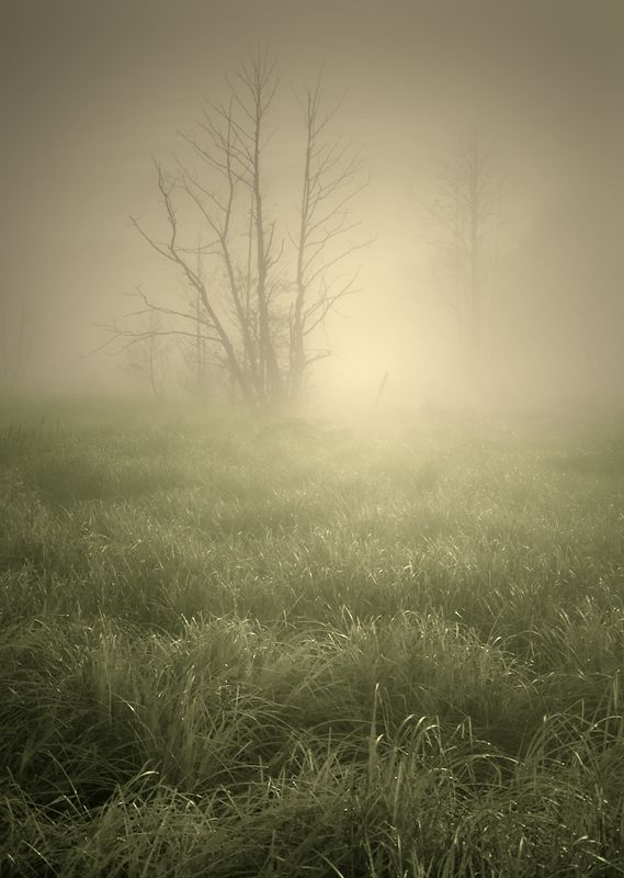 in the morning mist...photo preview