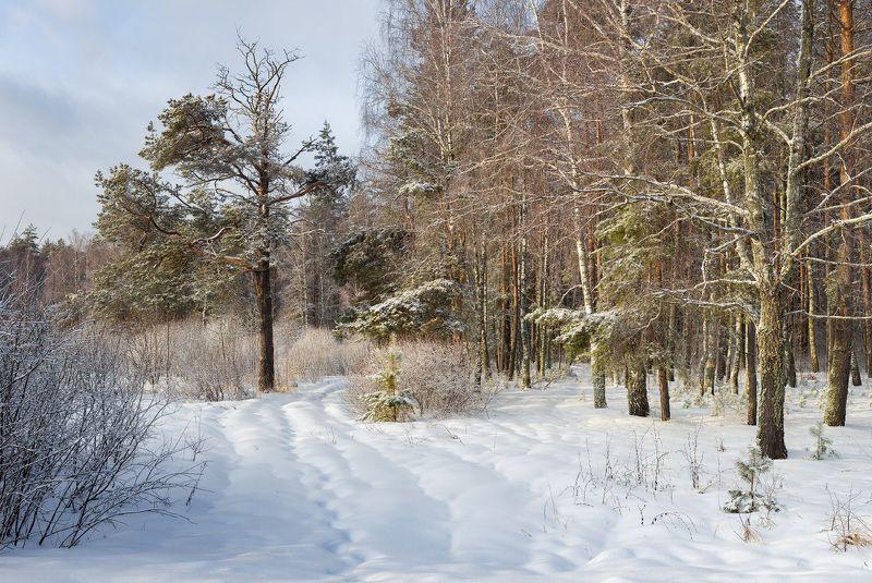 февраль утро мороз опушка На опуке лесаphoto preview