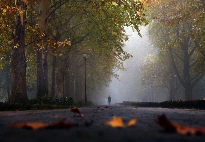 осень, туман, аллея, сквер На работуphoto preview