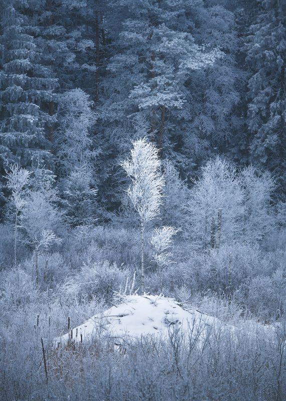 White winter treephoto preview