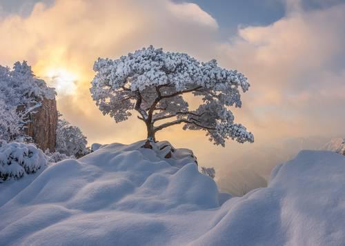 Temptation of the white tree