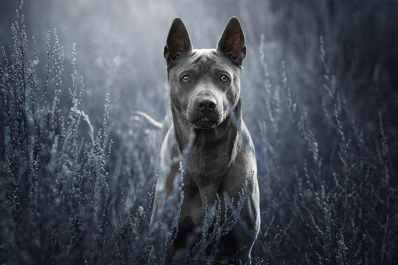 собака Юнаphoto preview