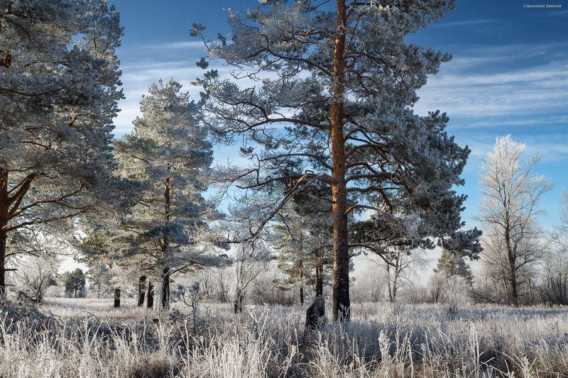 мороз, иней, октябрь, утро, поле Морозный октябрьphoto preview