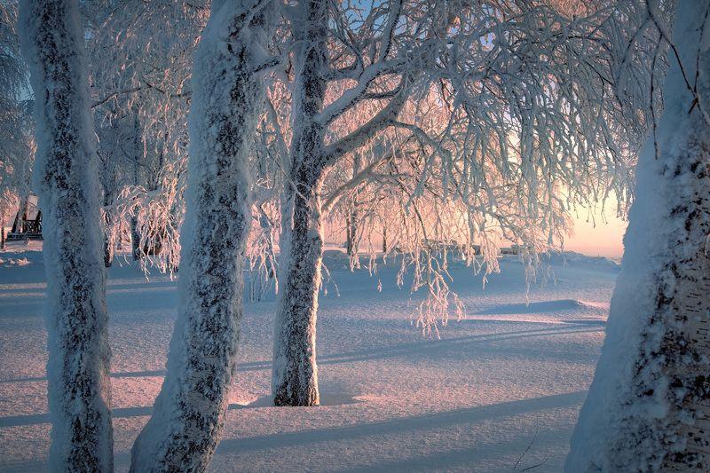 деревья, зима, березы, рождество, холод, мороз, монастырь, белая, гора Березы Белой горыphoto preview