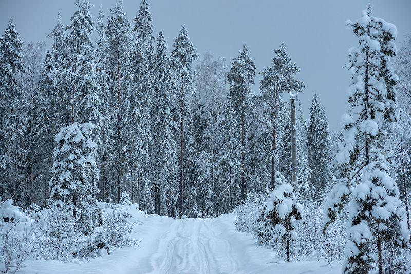 великий двор,вологодчина,кема,север,зима За делянкой.photo preview