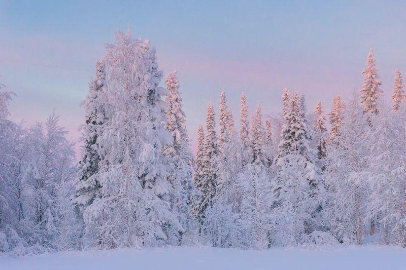 печора,коми,снег Лес севераphoto preview