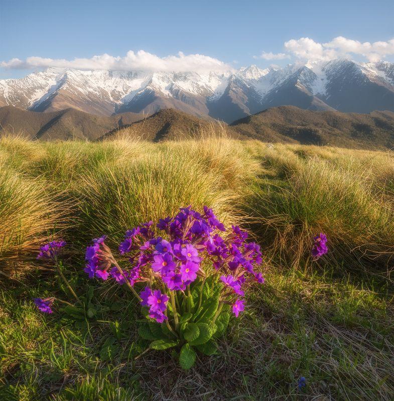 кавказ, ингушетия, заповедник, эрзи, фототур, андрей грачёв, Весна в горах Ингушетииphoto preview