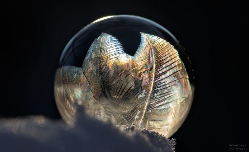 макро, природа, мыльные пузыри, лед, зима, снег, macro, nature, soap bubbles, ice, winter, snow, frozzenbubbles Ледяные папоротникиphoto preview