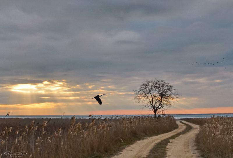 азов, сиваш, закат, вечер, цапля, птицы, зима, январь Закат и цапля на взлёте фото превью