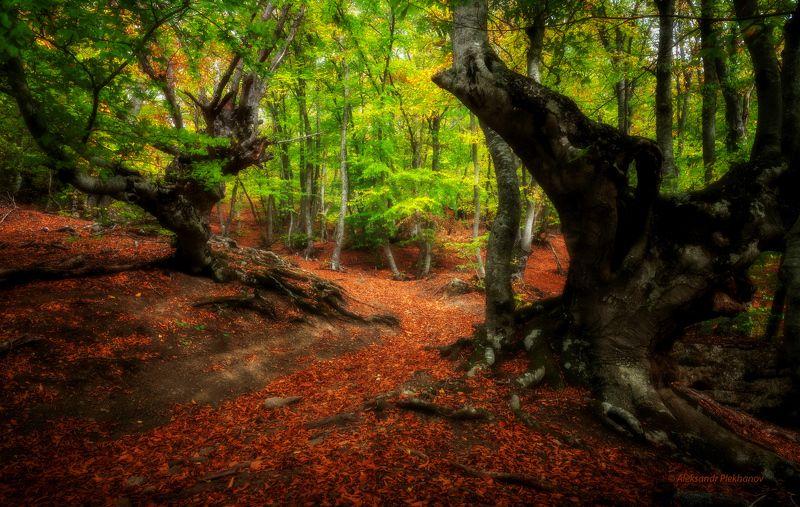 Часовые букового лесаphoto preview