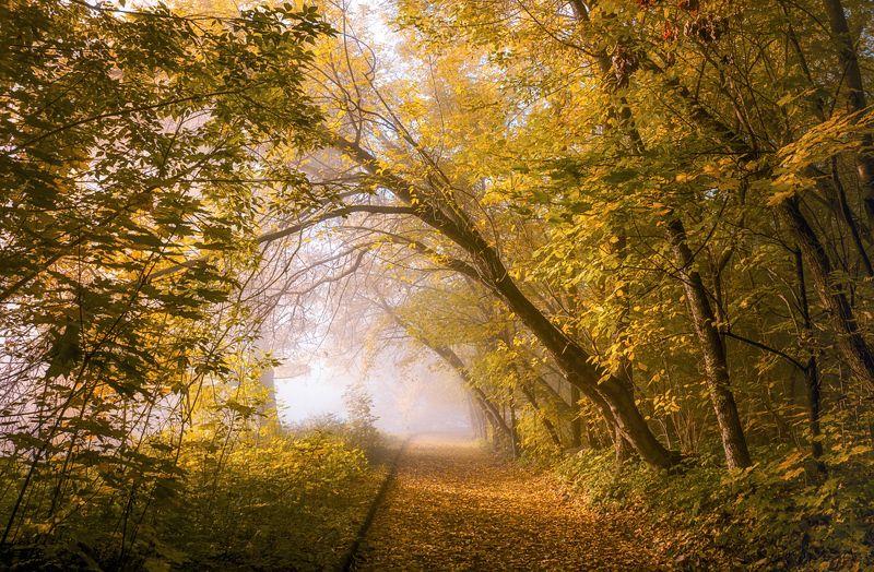 октябрь, парк, деревья Осенняя арка.photo preview