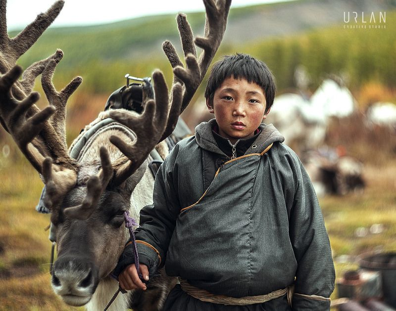 mongolia mongolian deer reindeer Tsaatanphoto preview