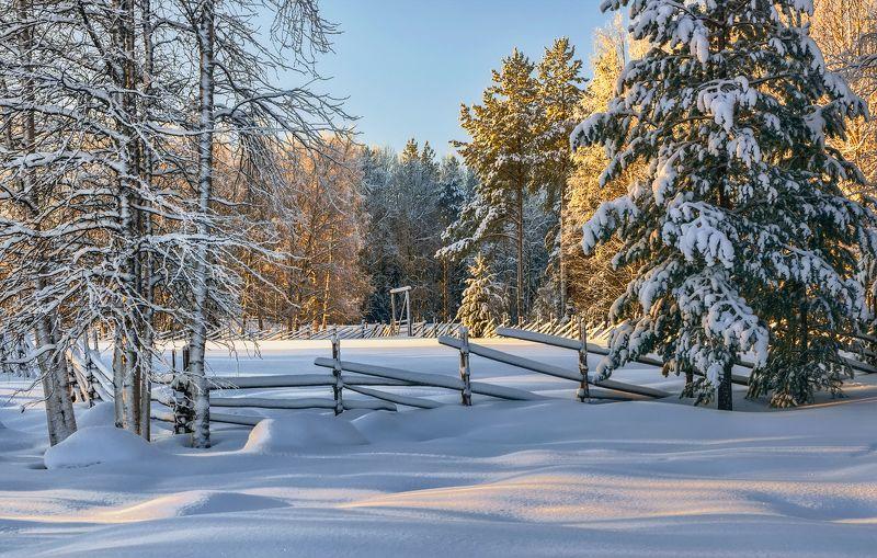зима лес деревья елки ветки снег сугробы солнце околица изгородь забор У заснеженной околицыphoto preview