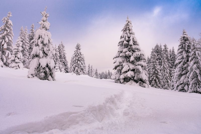 Mounains, nature, snow, nikon z6 Jizeraphoto preview
