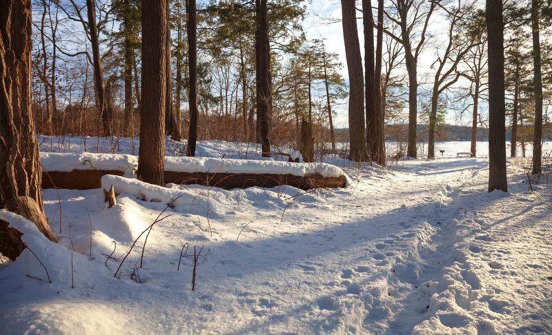 природа,зима,пейзаж,лес,деревья,снег,вечер, Февральphoto preview