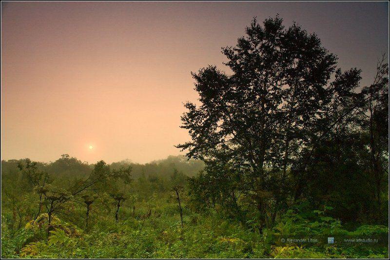 Восход, Камчатка, Лес, Рассвет, Туман Утроphoto preview