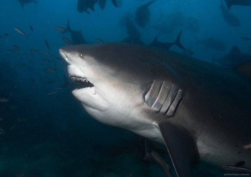 shark pornphoto preview