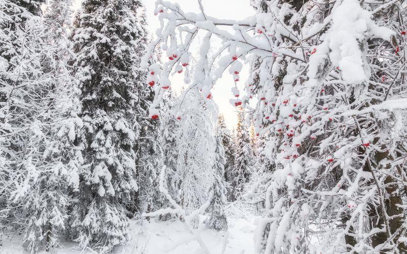 печора,коми,снег Белое на красномphoto preview