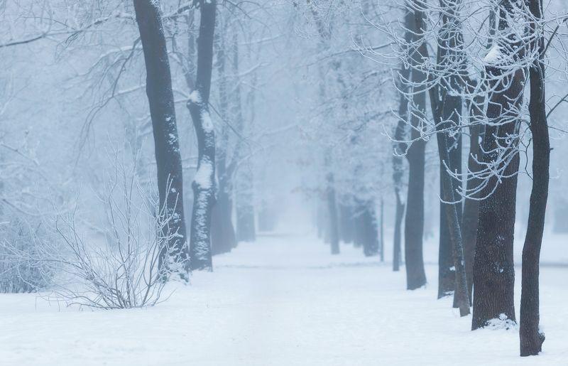 питер, пушкин, царское, царскоесело, зима Холодноphoto preview