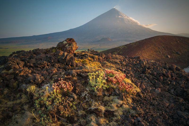 камчатка,ключевская,вулкан,kamchatka,vulkan о формах жизни и смертиphoto preview